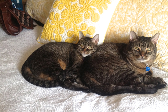 two striped cats napping with each other
