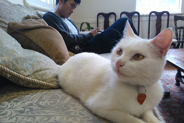 white cat hanging out on a couch