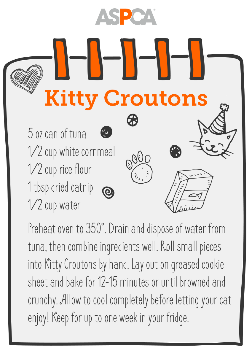 cat treat recipe