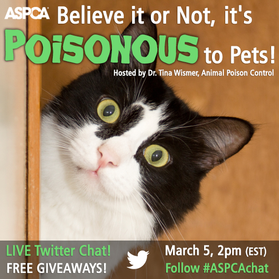 Is Anything In Your Home Poisonous to Your Pets? Join Our Twitter Chat to Find Out!