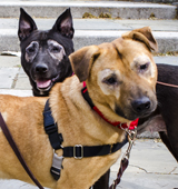 ASPCA Pets of the Week: Caitlyn and Dermott
