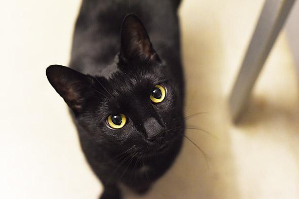 ASPCA Pet of the Week: Raymond