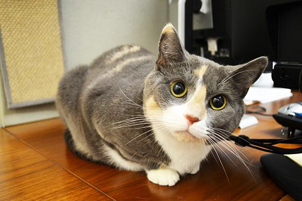 ASPCA Pet of the Week: Tootsie