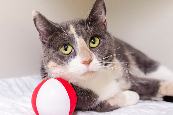 ASPCA Pet of the Week: Tootsie