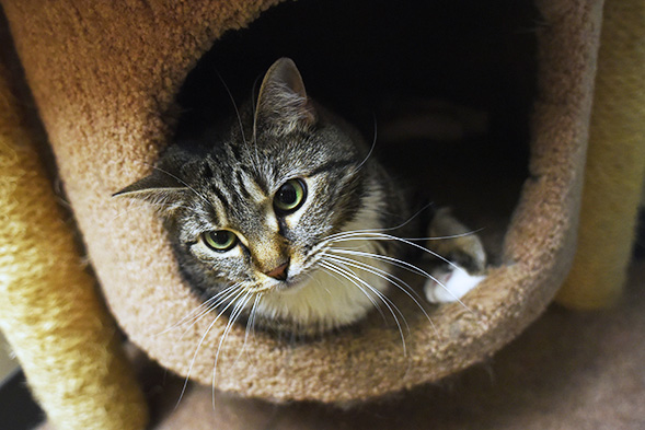 ASPCA Pet of the Week: Alicia