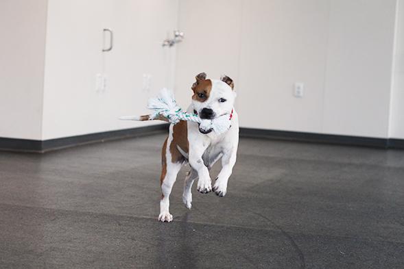 ASPCA Pet of the Week: Bevin