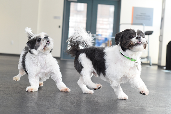 ASPCA Pet of the Week: Chase and Blaze