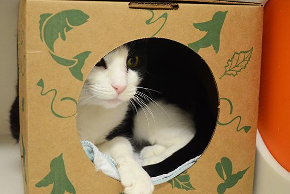 ASPCA Pet of the Week: Teodora