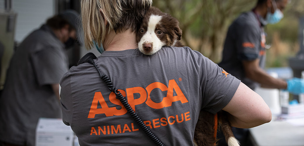 ASPCA responder carrying a rescued puppy