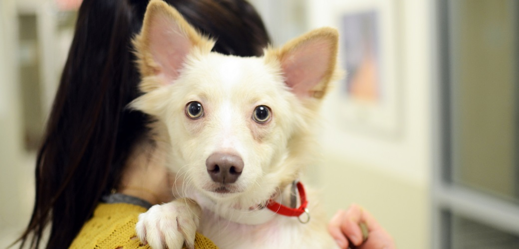 Pets and Safety of Domestic Violence Victims