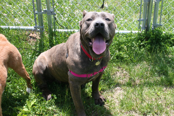 Pup and Circumstance: Lucy Is Ready for a Home