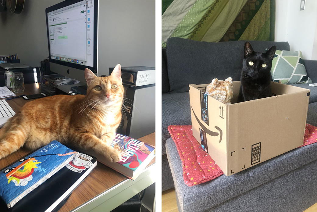 Two cats in boxes