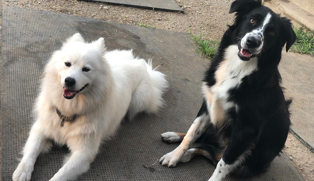 Casper and a friend
