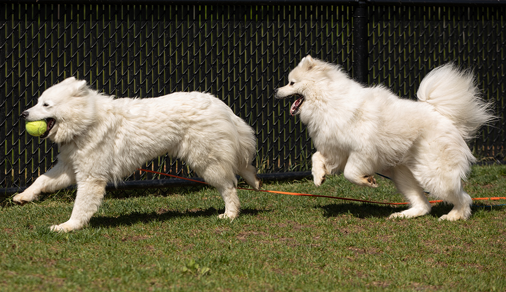 Maybel and Ivory playing