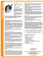 rabbit care tips to print pdf