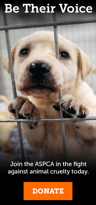Why You Should Never Buy a Puppy Online   ASPCA