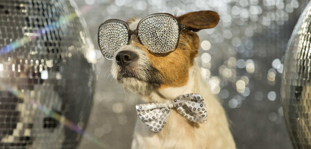 Ring in a Pet-Safe New Year with These Safety Tips