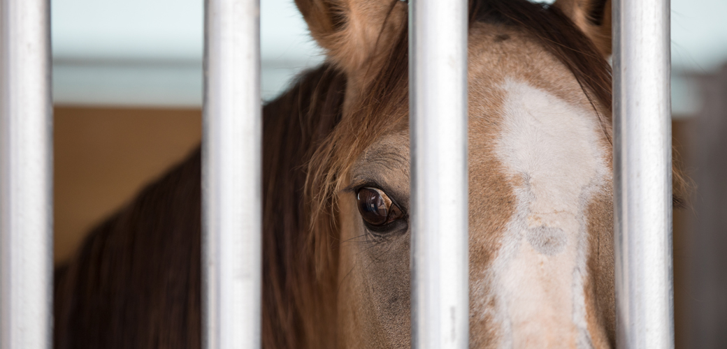 Horse behind bars