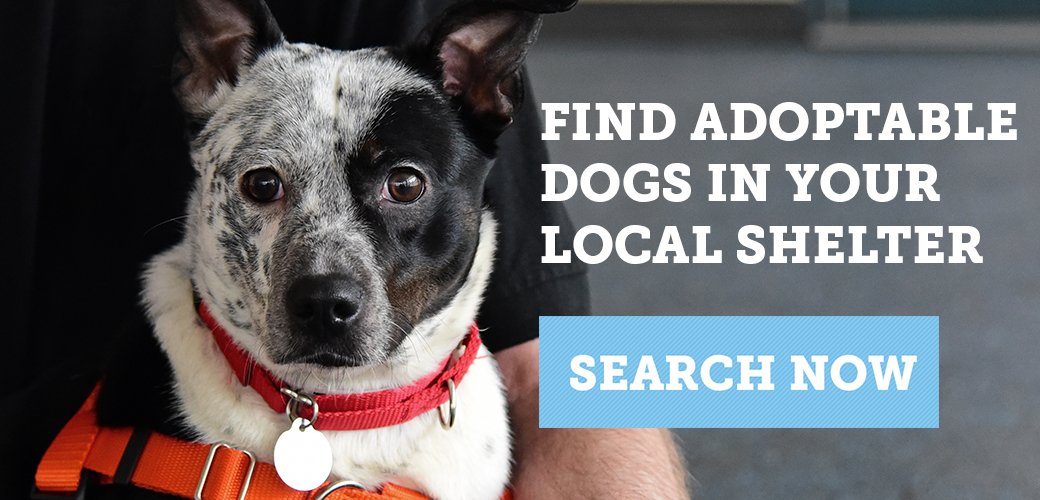Find adoptable dogs