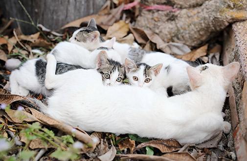 A Closer Look At Community Cats Aspca