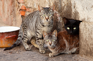 A Closer Look At Community Cats Stray Cats TNR ASPCA - Take look inside one amazing cat sanctuaries world