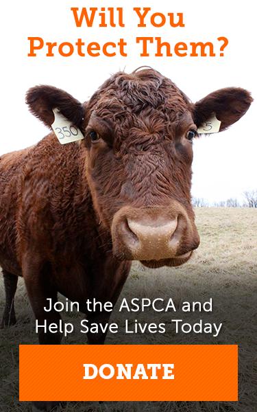 Certified Farms by State l Welfare Certified Farms l ASPCA