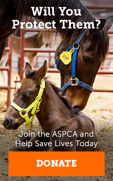 Horse Care Aspca