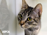 cat in the shelter wallpaper