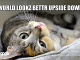lol cat wallpaper