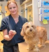 ASPCA Vet holding bladder stone