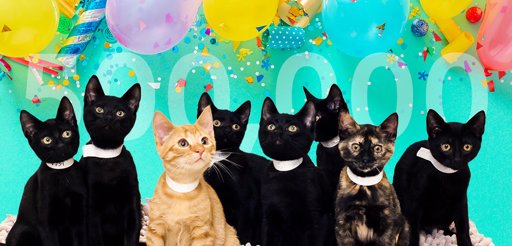 Kittens with balloons and confetti