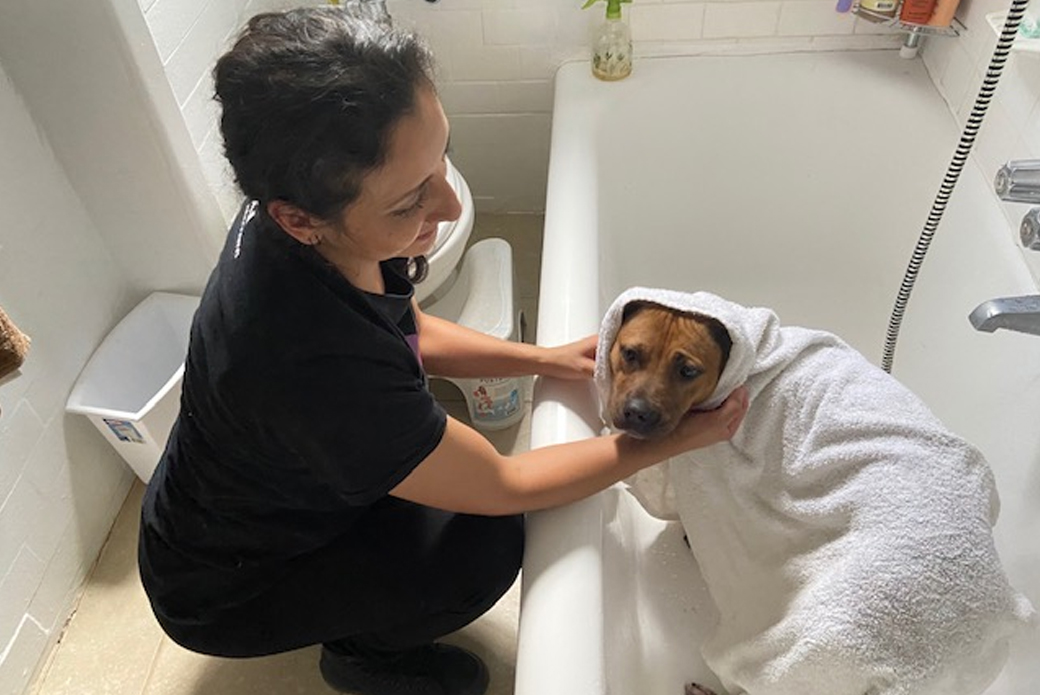 Soba getting a bath
