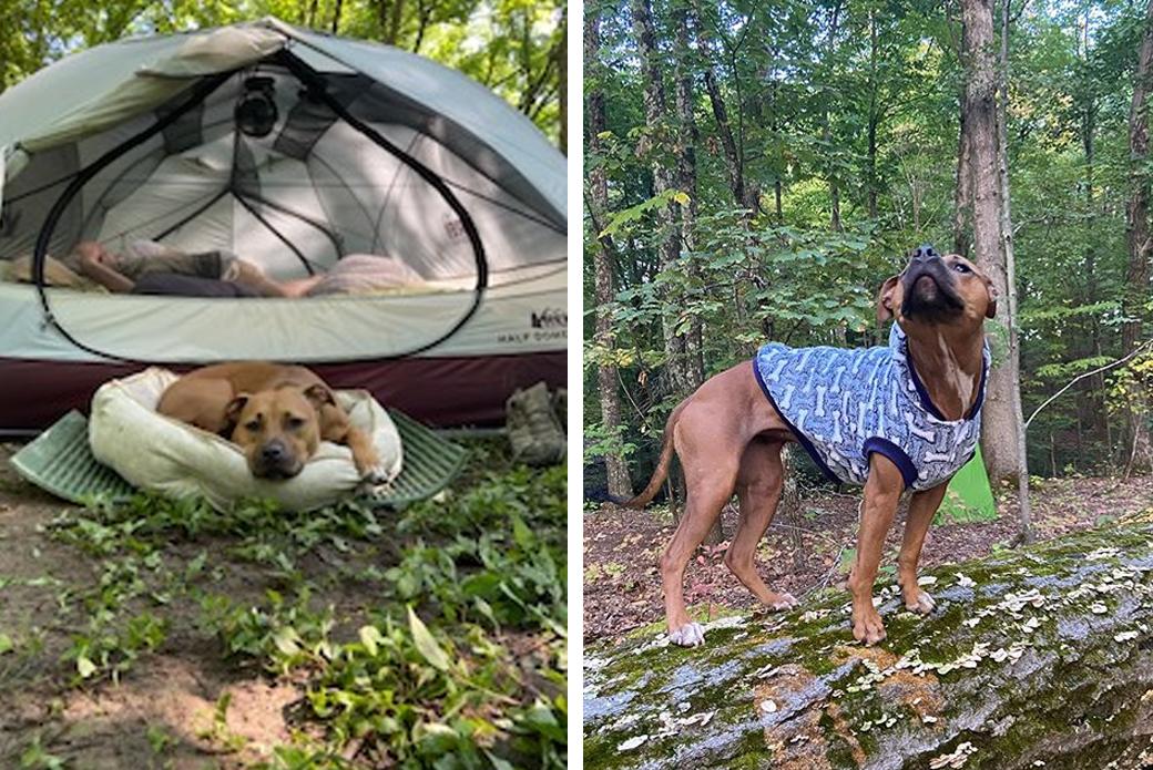 Soba camping