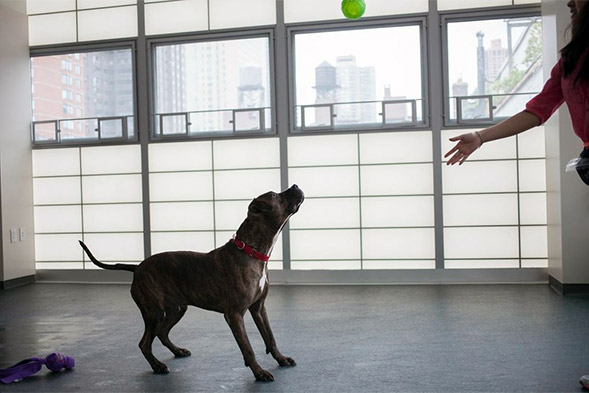Dog playing catch with ball