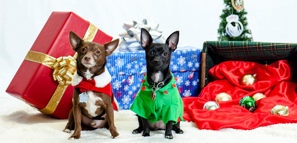 Top 10 Holiday Dangers for Pets