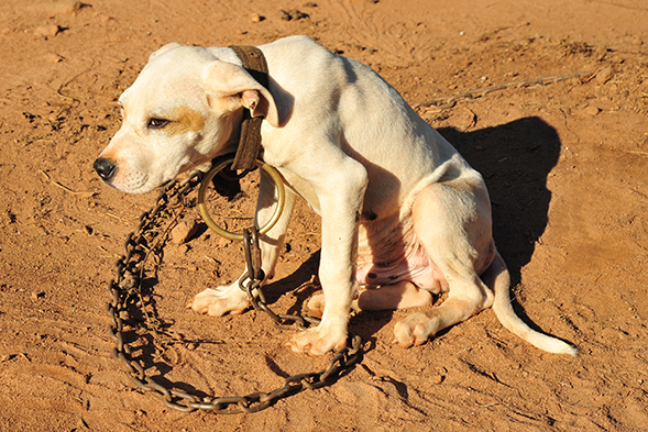 Strong Sentences Handed Down By Alabama Court in Historic Dog Fighting Case