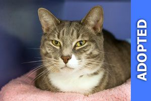 Abrahms was adopted!