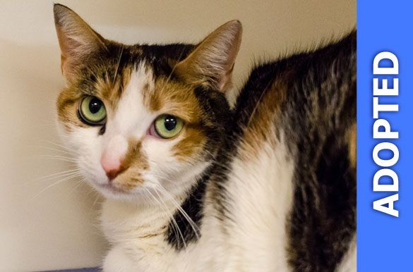 Acura was adopted!