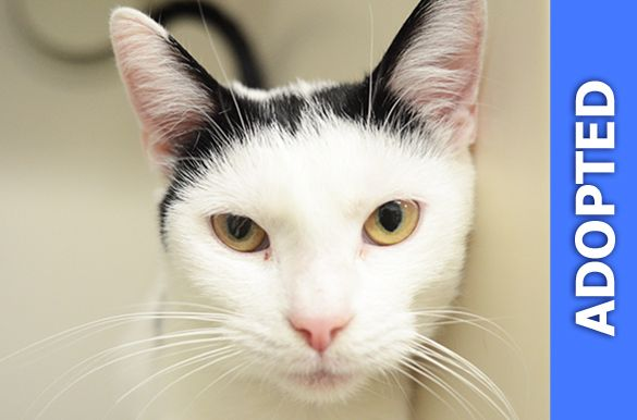 Adrienne was adopted!