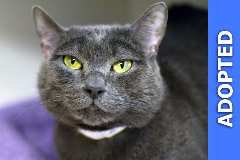 Amelia was adopted!