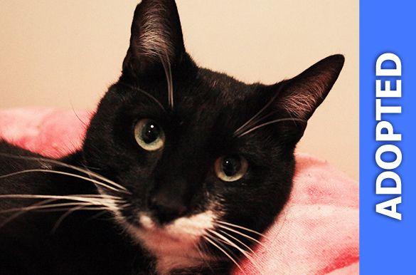 Annie was adopted!