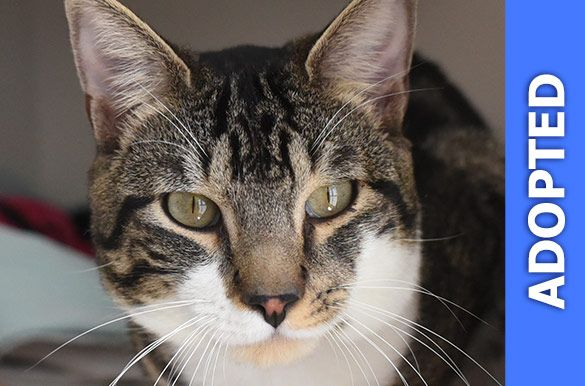 Arby was adopted!