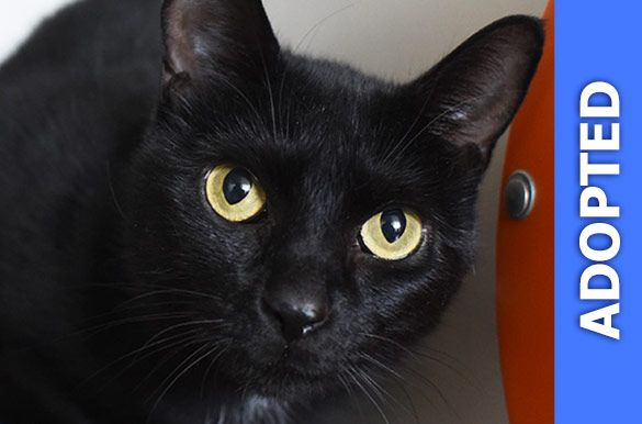 Ariana was adopted!
