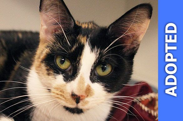 Ariel was adopted!