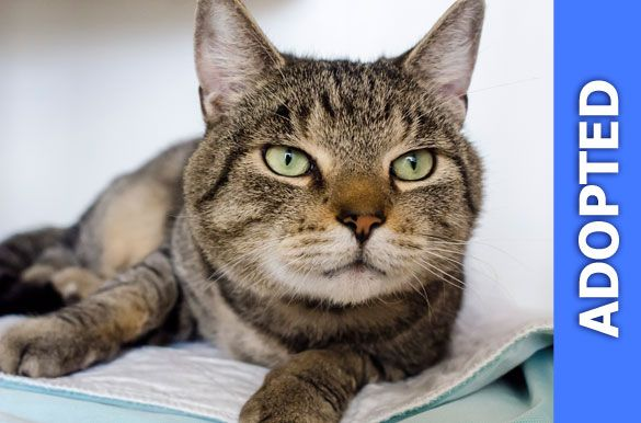 Aries was adopted!
