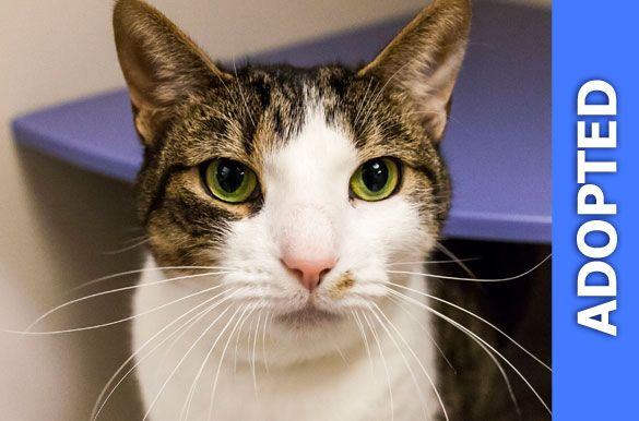 Arnie was adopted!