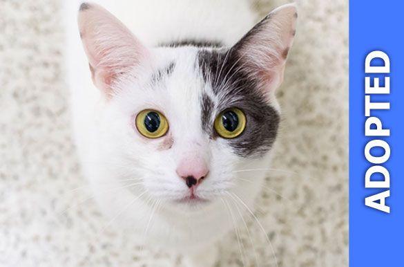Baylinita was adopted!