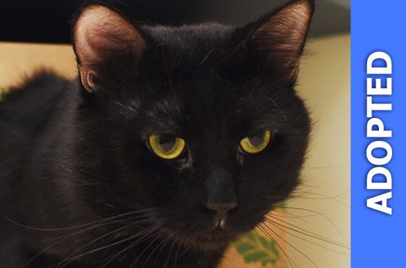 Ben Franklin was adopted!