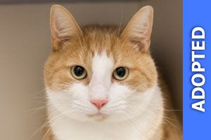 Benny was adopted!