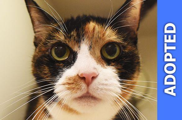 Binnie was adopted!